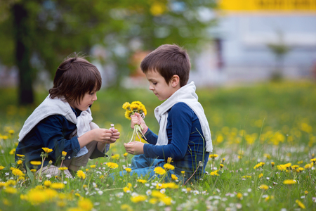 sit down: Sweet children, boys, gathering dandelions and daisy flowers in a spring field Foto de archivo