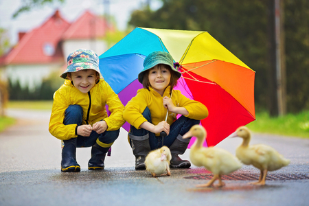 Beautiful children, playing with little ducklings in the rain, summertime