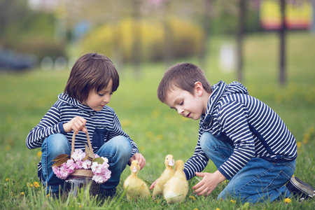 Two sweet children, boys, playing in the park with ducklings, springtime Stock Photo - 80537241