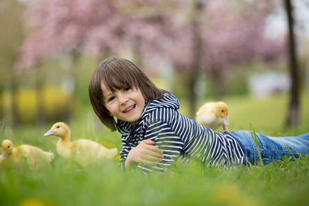 Cute sweet child, boy, playing in the park with ducklings, springtime Stock Photo - 80537247