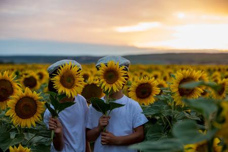 Bambini svegli, fratelli del ragazzo con il girasole nel giacimento del girasole di estate sul tramonto. Concetto di felicità per bambini Archivio Fotografico - 81944629