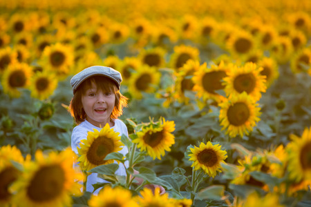 Bambino carino con girasole in campo di girasole estivo sul tramonto. Concetto di felicità dei bambini Archivio Fotografico - 81944639