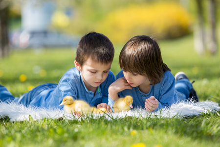 Cute little children, boy brothers, playing with ducklings springtime, together, little friend, childhood happiness Stock Photo - 84205150