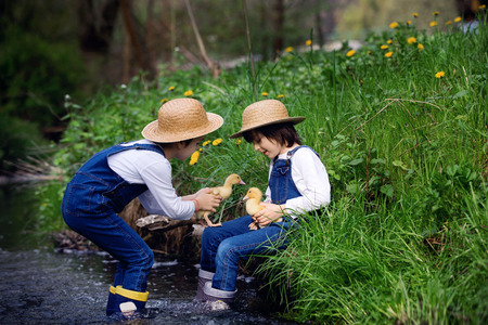Children, boys, playing on little river with ducklings, letting the duckling swimming for the first time. Childhood concept