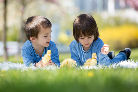 Cute little children, boy brothers, playing with ducklings springtime, together, little friend, childhood happiness