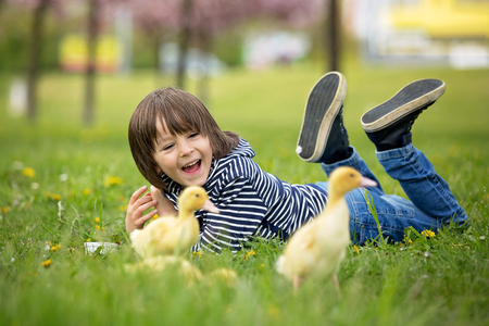 Cute sweet child, boy, playing in the park with ducklings, springtime Stock Photo - 96794581