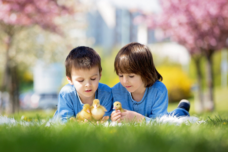Cute little children, boy brothers, playing with ducklings springtime, together, little friend, childhood happiness Stock Photo - 99247164