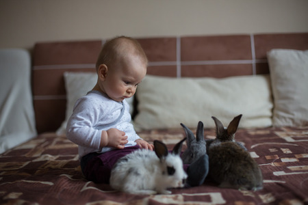 Cute little baby boy, playing with rabbits, pets at home