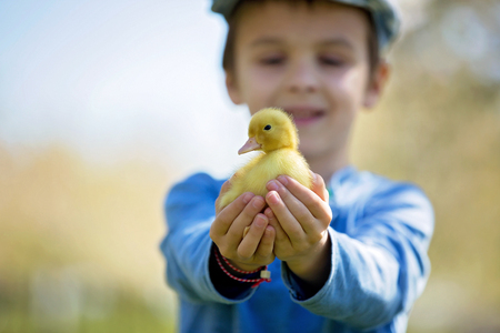 Cute little child, boy with duckling springtime, playing together, little friend, childhood happiness Stock Photo - 99247484