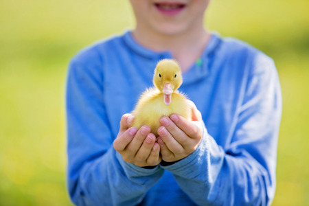 Cute little child, boy with duckling springtime, playing together, little friend, childhood happiness Stock Photo - 99247209