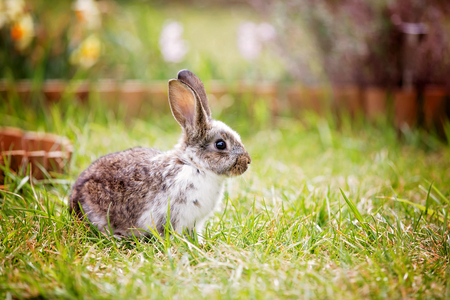 Adorable litle bunny in garden, pet at home, cute rabbit eating grass in park