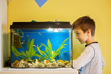 Little child, studying fishes in a fish tank, aquarium at home in kids room