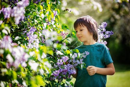 Cute preshcool boy, enjoying lilac flowers bush in blooming garden, springtime