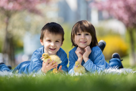 Cute little children, boy brothers, playing with ducklings springtime, together, little friend, childhood happiness Stock Photo - 100631939