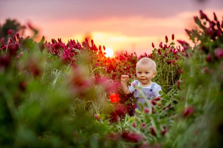 Beautiful toddler boy in gorgeous crimson clover field on sunset, springtime Stock Photo