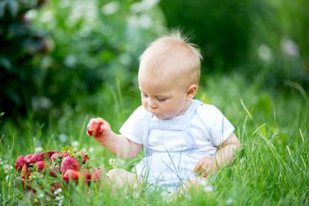Cute toddler child boy, eating strawberries in a garden, springtime