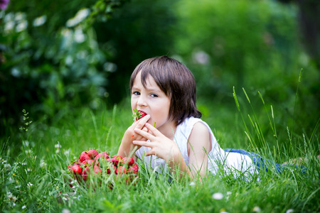 Cute preschool child, boy, eating strawberries in a garden, summertime Standard-Bild