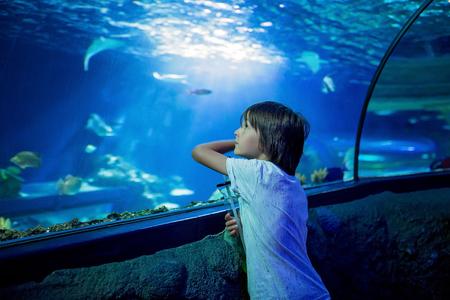 Little boy, kid watching the shoal of fish swimming in oceanarium, children enjoying underwater life in Aquarium Stock Photo