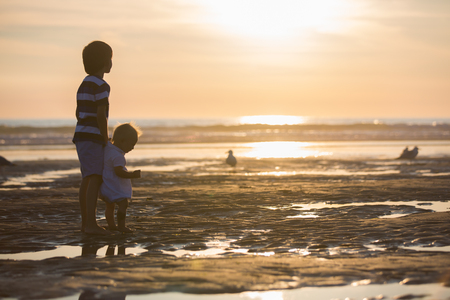 Children, beautiful boy brothers, watching and feeding seagulls on the beach on sunset