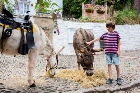 Cute boy with donkeys, feeding them