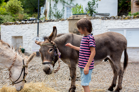 Cute boy with donkeys, feeding them Banco de Imagens - 107472426