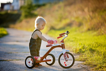 Cute toddler child, boy, playing with tricycle in park and eating apple, kid riding bike on sunset