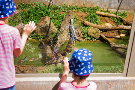 Little boys at exotic zoo, watching and observing crocodiles while feeding with fresh meat