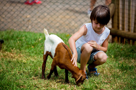 Preschool boy, petting little goat in the kids farm. Cute kind child feeding animals in the zoo 스톡 콘텐츠