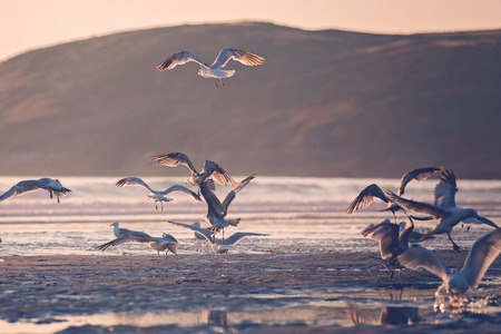 Seagulls on the beach on sunset, beautiful view Stock Photo