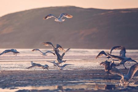 Seagulls on the beach on sunset, beautiful view Stock Photo - 120398054