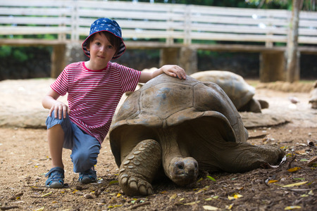 Happy preschool boy, playing and feeding giant tortoises in a exotic park on Mauritius island. Big turtle and kids