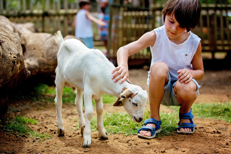 Preschool boy, petting little goat in the kids farm. Cute kind child feeding animals in the zoo Фото со стока