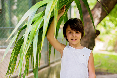 Close portrait of sweet preschool boy, holding big leaf in rainforest, smiling 写真素材