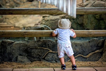 Cute little toddler boy at the zoo, exploring animal world, watching funny monkey, monkey watching at him