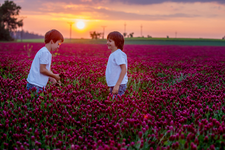 Beautiful children, brothers in gorgeous crimson clover field on sunset, gathering flowers for mom, springtime Imagens
