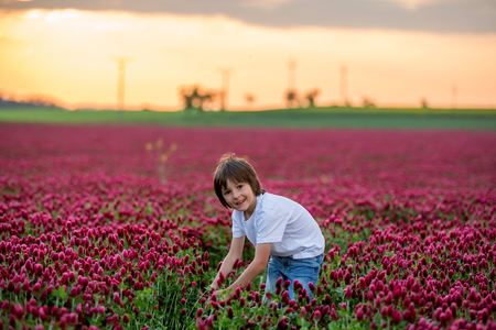 Beautiful child in gorgeous crimson clover field on sunset, gathering fresh spring flowers for mom for Mothers day, springtime Standard-Bild - 123188663