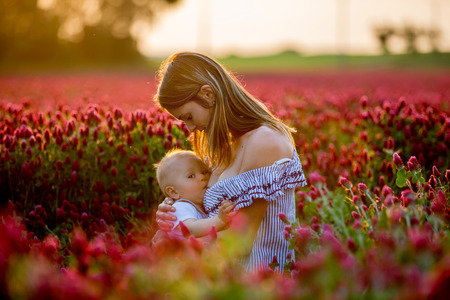 Beautiful young mother, breastfeeding her toddler baby boy in gorgeous crimson clover field on sunset, springtime