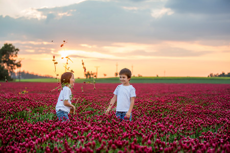 Beautiful children, brothers in gorgeous crimson clover field on sunset, gathering flowers for mom, springtime Standard-Bild - 123189130