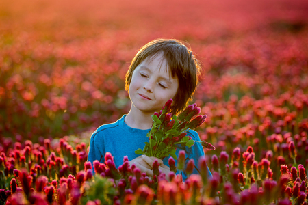 Beautiful child in gorgeous crimson clover field on sunset, holding bouquet of freshly gathered spring flowers, springtime