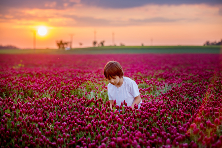 Beautiful children in gorgeous crimson clover field on sunset, springtime