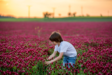 Beautiful child in gorgeous crimson clover field on sunset, gathering fresh spring flowers for mom for Mothers day, springtime