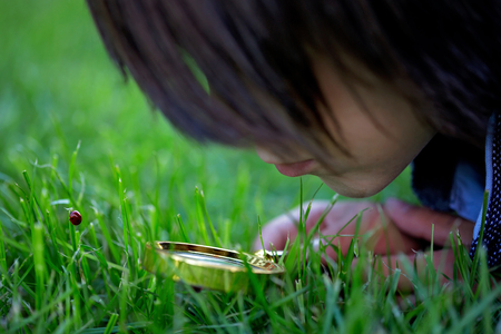 Preteen child, boy, exploring with magnifying glass, watching ladybugs in the grass Imagens