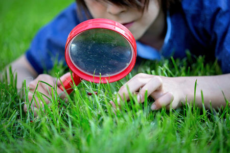 Preteen child, boy, exploring with magnifying glass, watching ladybugs in the grass Stok Fotoğraf