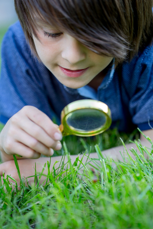 Preteen child, boy, exploring with magnifying glass, watching ladybugs in the grass Stok Fotoğraf - 124260103