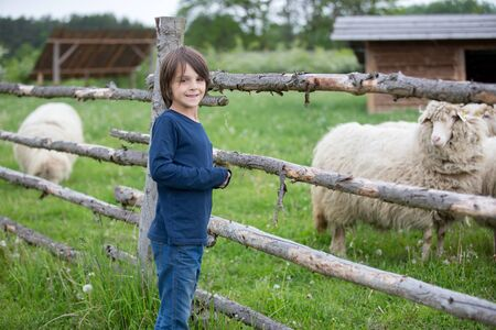 Little preschool boy looking at sheeps in a farm. Holiday for families in the countryside Stock Photo