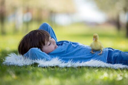 Cute little child, boy with duckling springtime, playing together, little friend, childhood happiness Stock Photo - 128934816