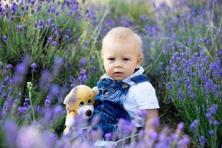 Sweet toddler child in casual cloths, sitting in lavender field, smiling happily