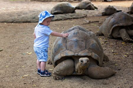 Happy family, toddler, older children and parents, feeding giant tortoises in a exotic park on Mauritius island. Big turtle and kids