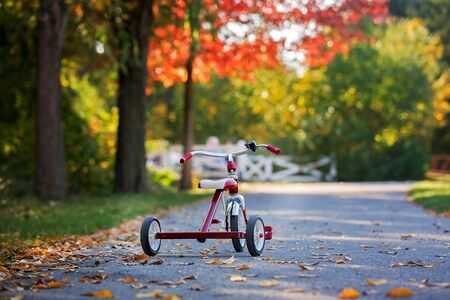 Sweet toddler boy, riding tricycle in the park on sunset, autumn time, siblings in the park, enjoying warn autumn day Standard-Bild