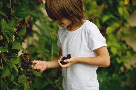 Happy child, eating blackberries in garden, freshly gathered